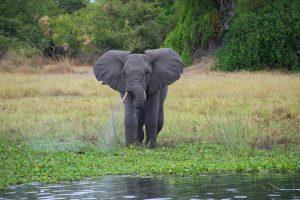 Malawi - wildlife