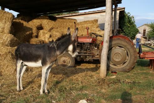 Agrotoerisme - Zlatan Buzdon